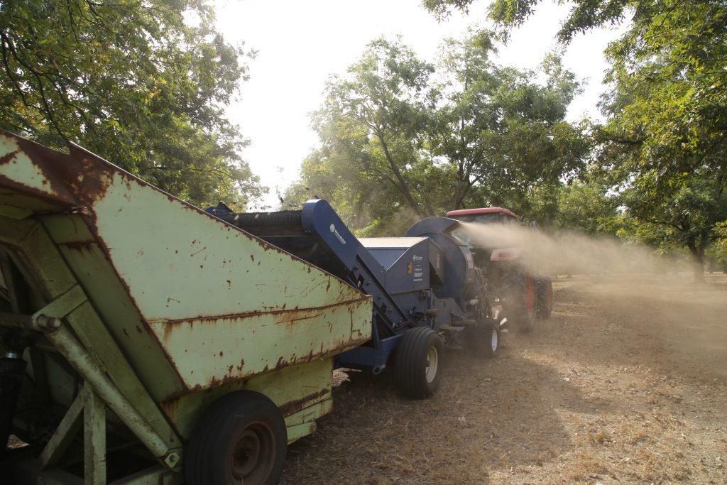 Pecan harvest season